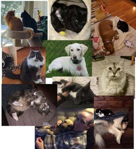 dog and cats that were adopted
