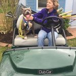 dog going for a ride