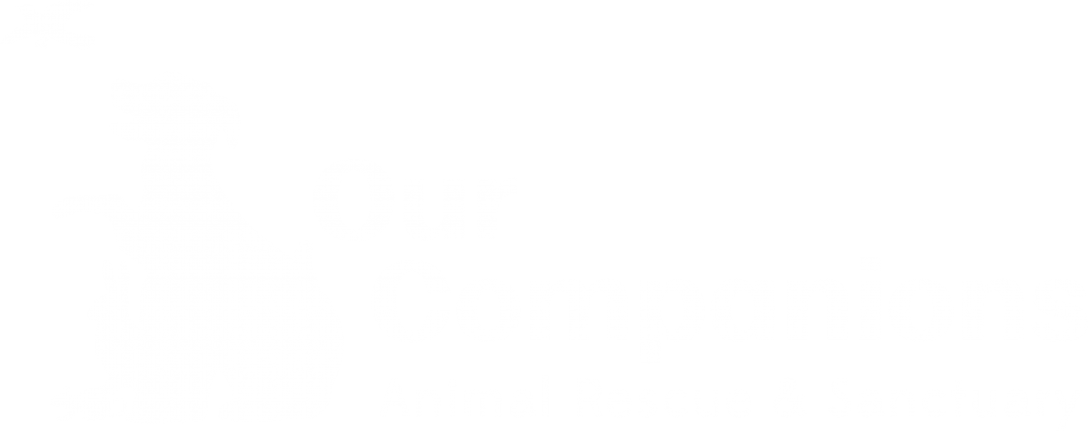 updated-logo-recommendation-white