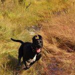 Abby running