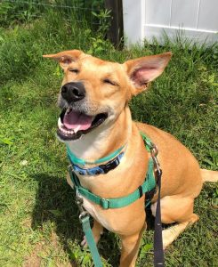 Brooke enjoying a hardy laugh at her silly hoomans.