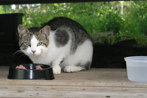 Feral Cat Resources