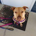 Roxi-Adoption-090520c