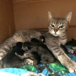 Opal and kittens 032621
