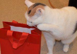 Hazel & gift