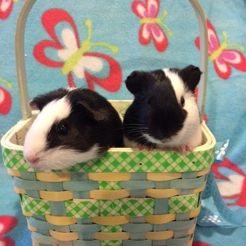 Lily and Violet in basket