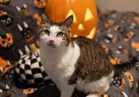 Pumpkin.jpg resize