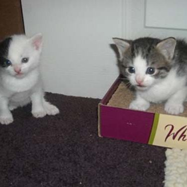 kittens hanging out