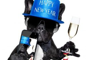 french bulldog dog ready to toast for new years eve taking a selfie or photo isolated on white background